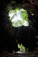 鹿児島県 屋久島町 ウイルソン株内部から見た樹洞