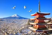 山梨県 新倉山浅間公園 朝の富士山と雪景色の忠霊塔