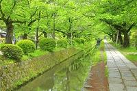 京都府 新緑の哲学の道