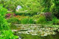 フランス ジベルニーのモネの庭園