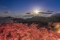 開山公園の夜桜