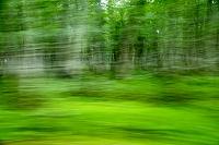 青森県 ブナ林 霧雨 流れるブナ林
