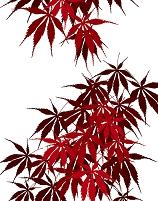 植物柄のパターン