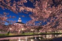 山形県 鶴岡公園 桜と致道博物館の夜景
