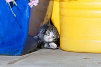 隙間から顔を出す子猫