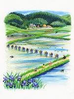 田植え 水彩画