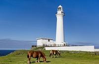 青森県 尻屋崎灯台と寒立馬
