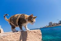 マルタ島 猫