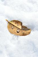 雪の上に落ちた枯葉