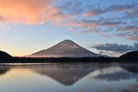 山梨県 精進湖より朝焼け雲と富士山