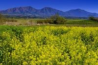 岡山県 ナノハナ咲く蒜山高原と蒜山三座