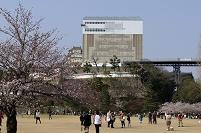 兵庫県 姫路城公園広場から修復中の天守閣を見る