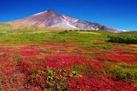北海道 紅葉の旭岳