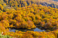 山形県 秋の鶴間池 俯瞰