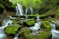 兵庫県 新温泉町 新緑の猿壺の滝