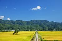 山形県 田園