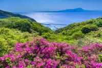 島根県 ツツジ咲く五本松公園より大山