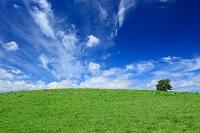 北海道 美瑛町 草原と一本の木