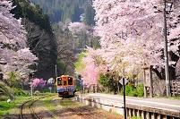 福島県 桜咲く湯野上温泉駅と列車