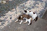 香川県 佐柳島 堤防で眠る猫