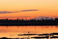 北海道 風連湖の夕映とタンチョウのネグラ