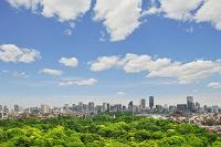 東京都 新宿御苑と都心のビル群
