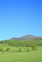 山梨県 八ヶ岳牧場 新緑の牧場と八ヶ岳