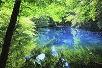 山形県 遊佐町 丸池様の池と新緑