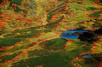 北海道 大雪山紅葉