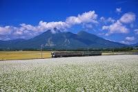 福島県 そば畑と磐越西線