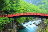 栃木県 日光市 初夏の大谷川と神橋
