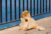 地中海と猫