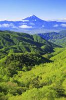 山梨県 乙女高原から望む残雪の富士山と新緑の山並み