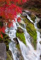長野県 冷泉小屋付近の滝と紅葉