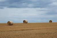 麦ロールの丘