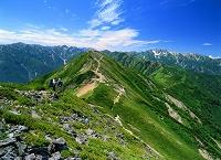 長野県・大町市 爺ヶ岳より北アルプスの山並み