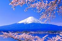 山梨県 富士山とサクラ