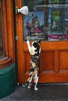 オランダ アムステルダムの猫
