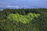 東京都 高尾山のハート型の森