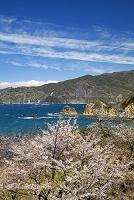 静岡県 桜咲く黄金崎