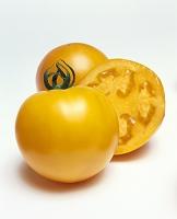 トマト(黄寿)