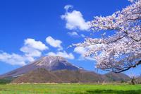 鳥取県 桜と大山