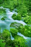 青森県 草木生える岩の間を流れ下る沢水