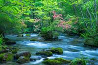 奥入瀬渓流 青森県 十和田市