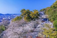 和歌山県 桜咲く紀三井寺