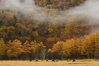 栃木県 光徳牧場
