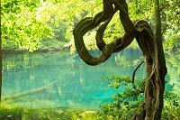 山形県 丸池 丸池様