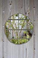丸窓と庭木