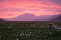群馬県 片品村 朝焼けに包まれるワタスゲ咲く尾瀬ヶ原と燧ヶ岳