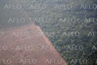 アマゾンの森林破壊